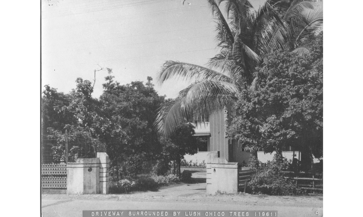 Driveway surrounded by Lush Chico Trees (1961)